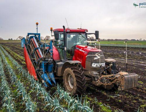 Organic Produce – Harvesting Organic Leeks