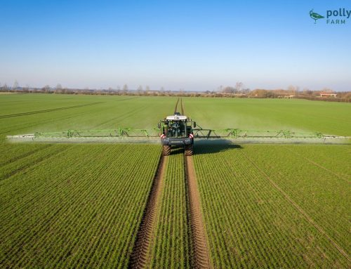 Spraying our Organic Winter Wheat