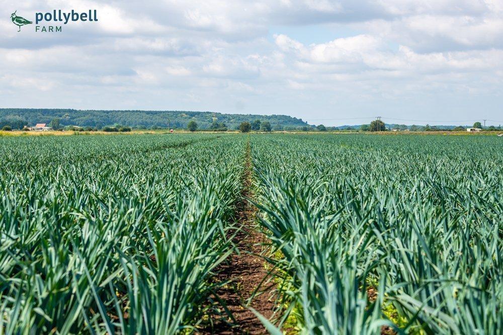 Our first new season leeks - Pollybell Farm