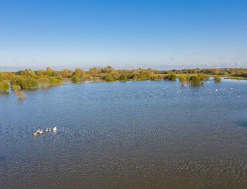 SSSI Wetland