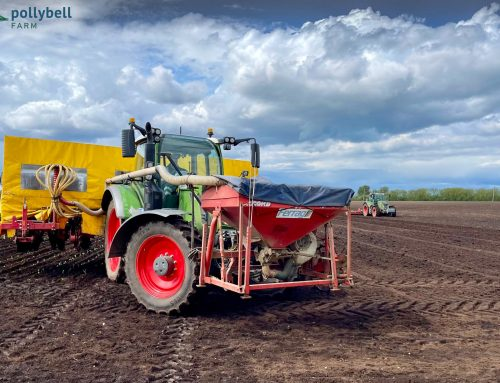 Preparing land and planting broccoli